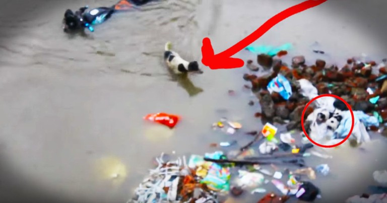 Dedicated Momma Dog Bravely Rescues Her Stranded Puppies