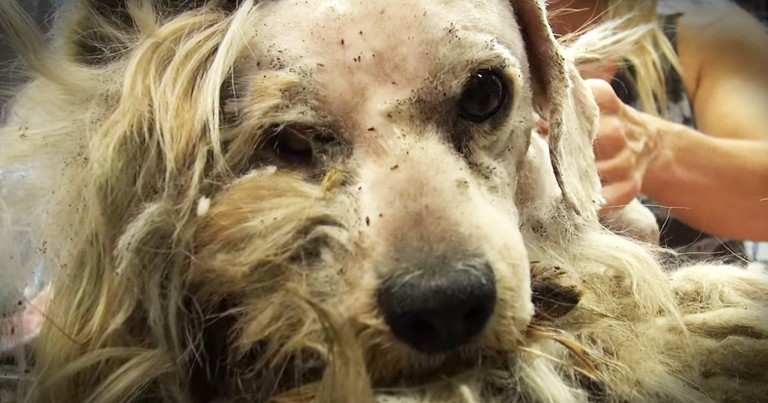 Stray Dog's Dramatic Rescue And Transformation Is Powerful