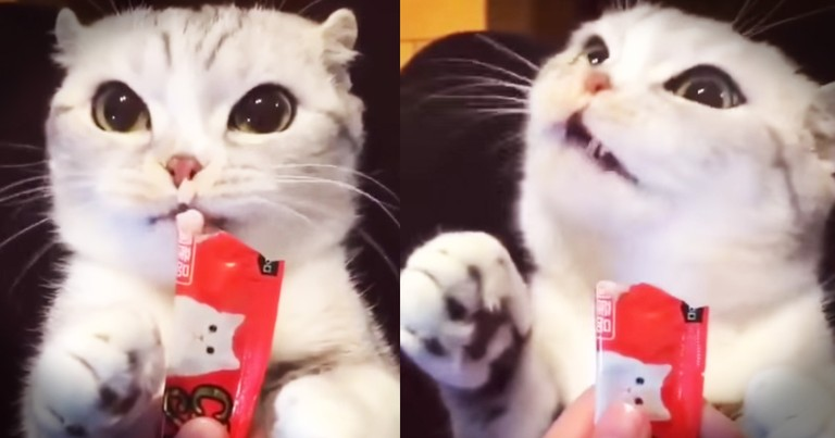 Kitty's Funny Snack Will Leave You Giggling
