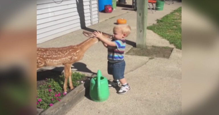 Seeing This Little Boy Meeting This Tiny Deer Is Truly Magical