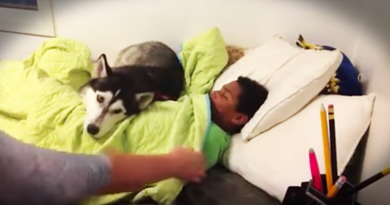 Funny Dog Is Determined To Not Let Boy Out Of Bed