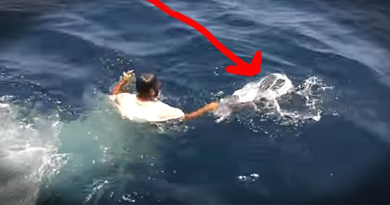 Turtle Trapped In Trash Gets Amazing Rescue