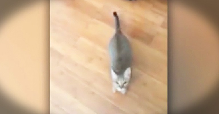 Funny Cat REALLY Doesn't Like When Owner Sings