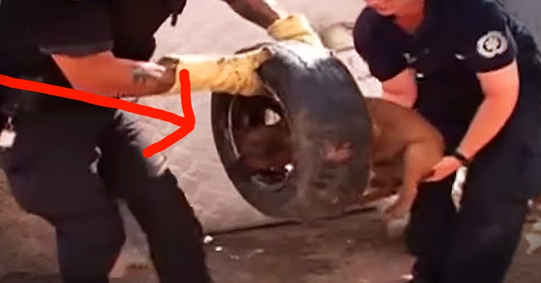 Poor Dog With Head Stuck In Tire Gets Beautiful Rescue