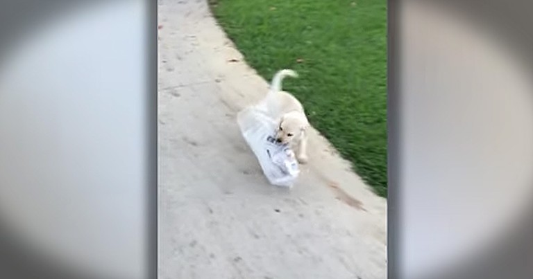 Tiny Puppy's BIG Struggle With The Newspaper Is Too Cute