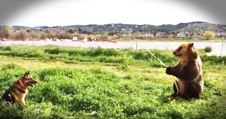 Bear Sprays A Dog With A Hose And I Can't Stop Smiling
