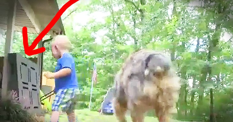 Family Dog Saves 18-Month-Old From Potentially Deadly Snake Bite
