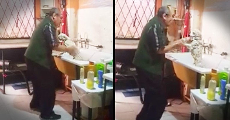 Pet Groomer Gets Caught Dancing With A Dog And It's Beyond Adorable
