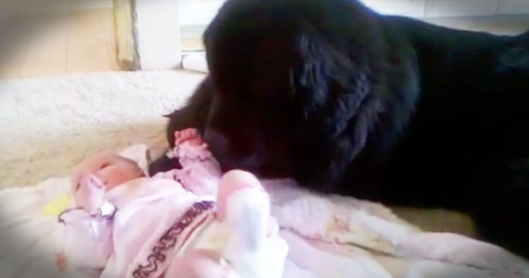 This Big Pup Is One Adorable Babysitter