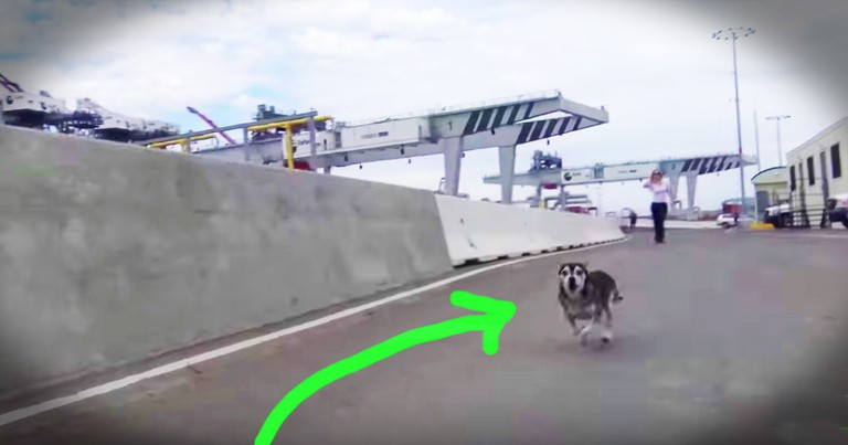 Elaborate Dog Rescue Takes Days And The Biggest Crew We've Ever Seen