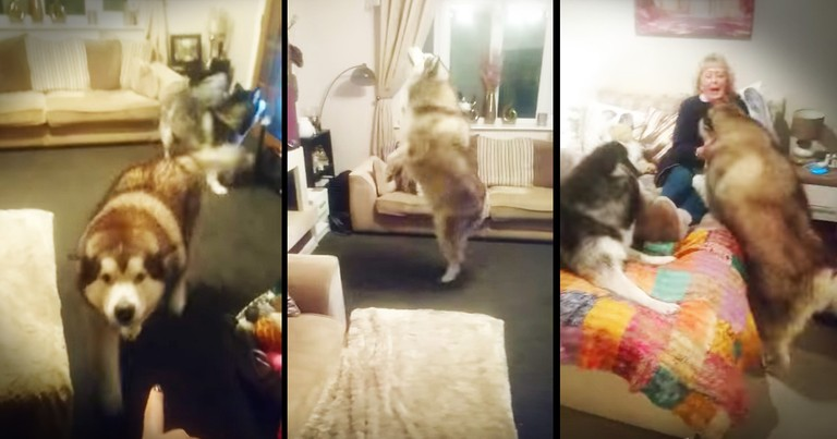 Dogs Smell That Grandma Is In The House And Have The Cutest Reaction