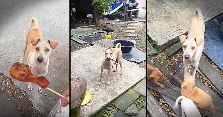 Mama Dog Begs For Food To Fed Puppies