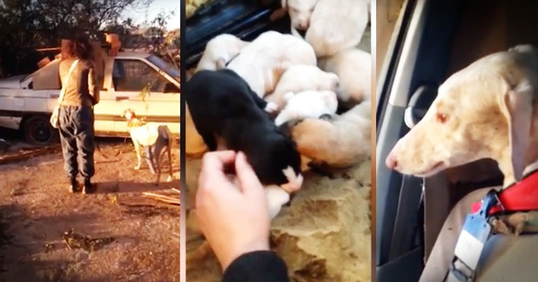 Severely Injured Dog Leads Rescuers To Her Puppies