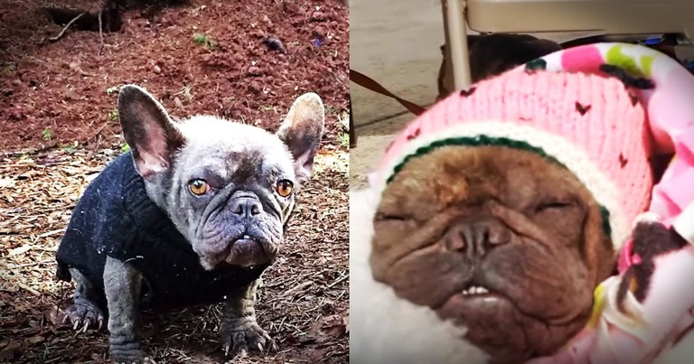Dog Kept In A Hole In The Dirt Gets The Most Amazing New Family