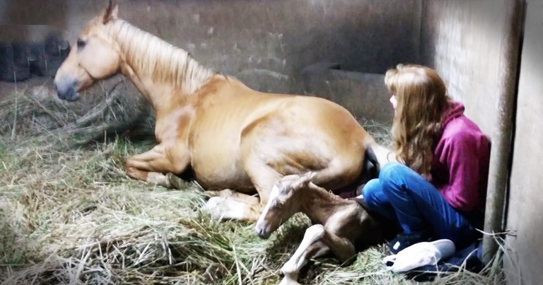 Pregnant Horse Gives Birth And Then They Notice She's Not Done