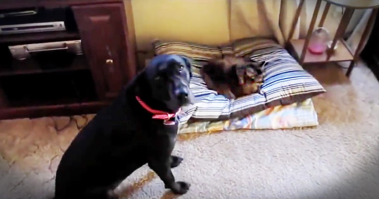 This is the Hilarious Reason Why Cats and Dogs Don't Get Along