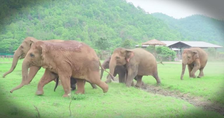 Elephants Rush To Welcome New Baby Elephant