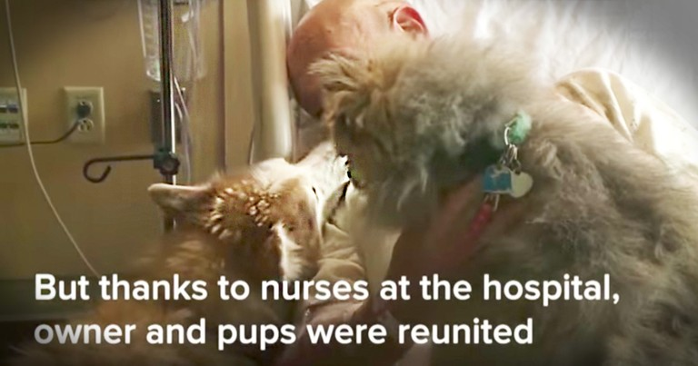 Man Reunites With Dogs He Lost After A Tornado