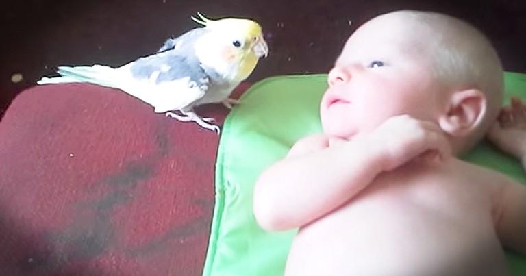 Sweet Cockatiel Sings To 2-Week-Old Baby