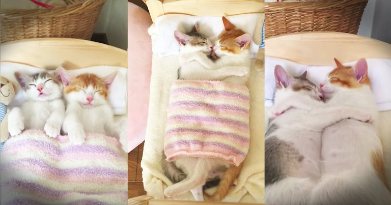 Precious Kittens Just Love To Cuddle Side By Side