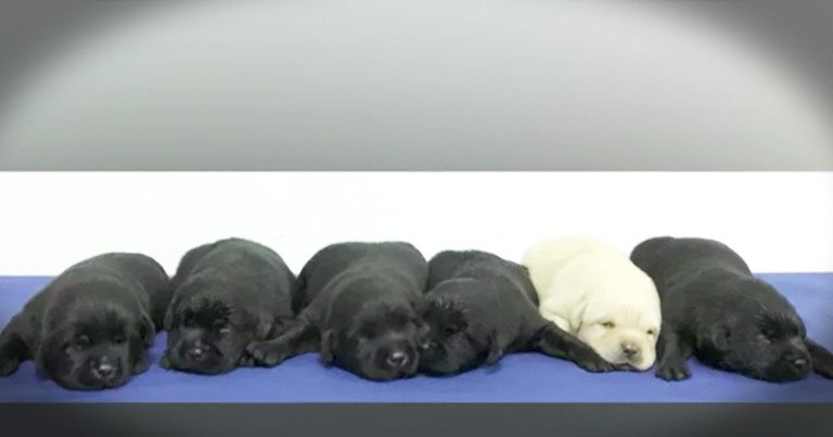 Police Photoshoot With Newest K9 Recruits Are Too Sweet
