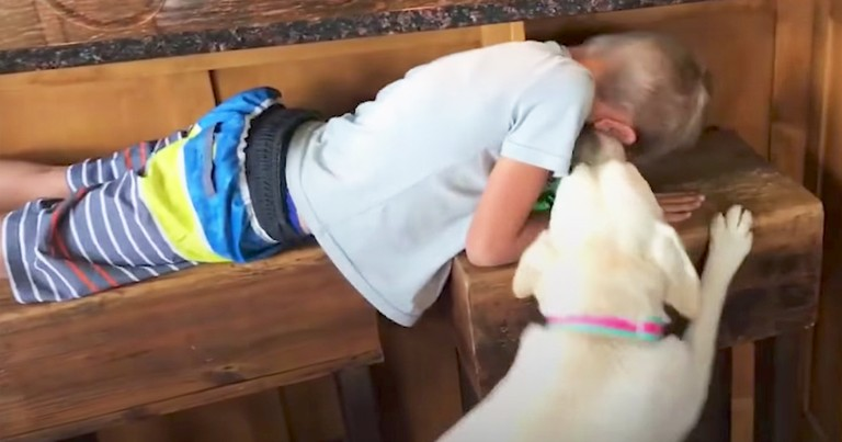 Adorable Little Boy Plays Hide-And-Seek With His Dog