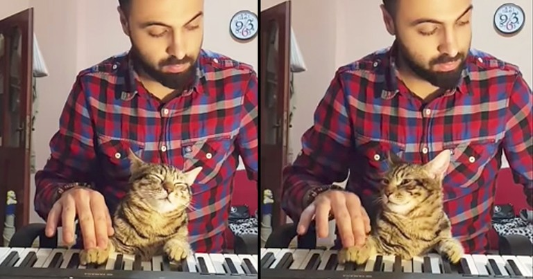 Adorably Relaxed Cat Helps Owner Play Piano