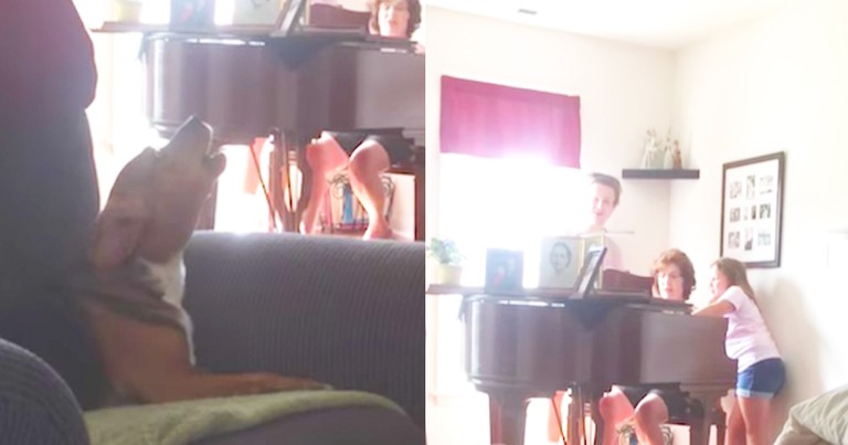 Hilarious Dog Sings Along To Hymn During Piano Rehearsal