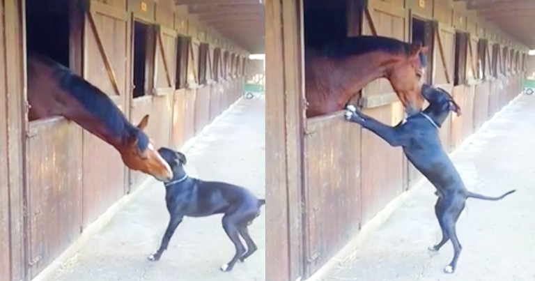 Adorable Horse And Dog Play Together At The Stables