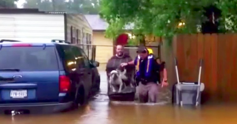 Hurricane Volunteers Band Together To Save Stranded Pets