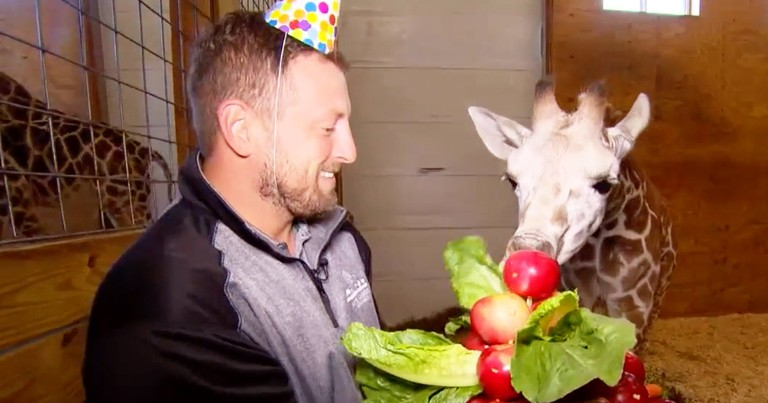 April The Giraffe's Adorable Baby Calf Turns 6 Month Old