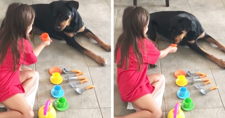 Adorable Dog Lovingly Participates In Tea Party With Little Girl
