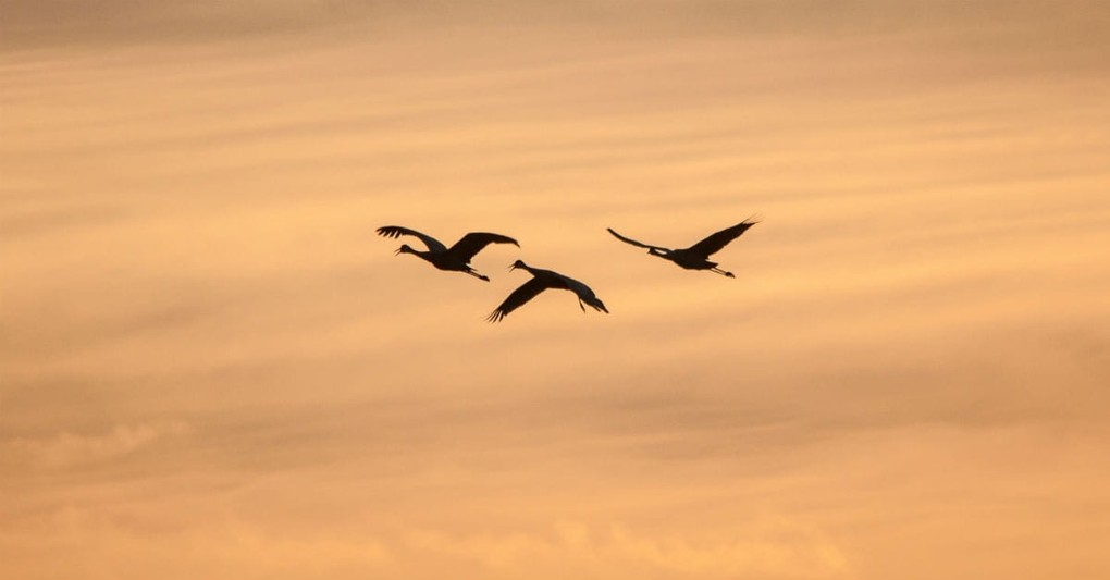 10 Reminders (From a Bird!) to Help You Kick Worry to the Curb