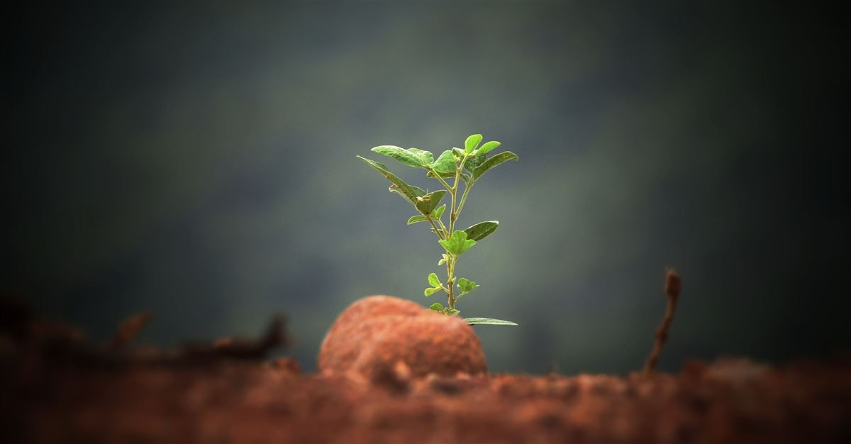 Sunday School Lesson: Growing Like a Seed