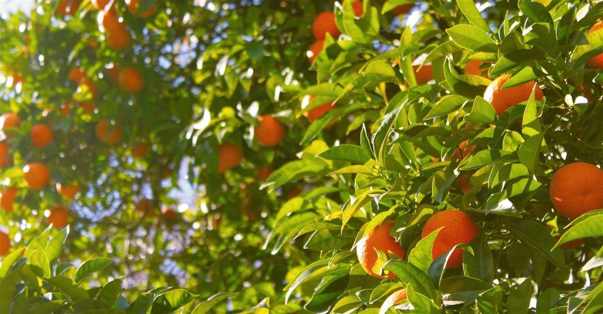 Sunday School Lesson: Fruit of the Spirit