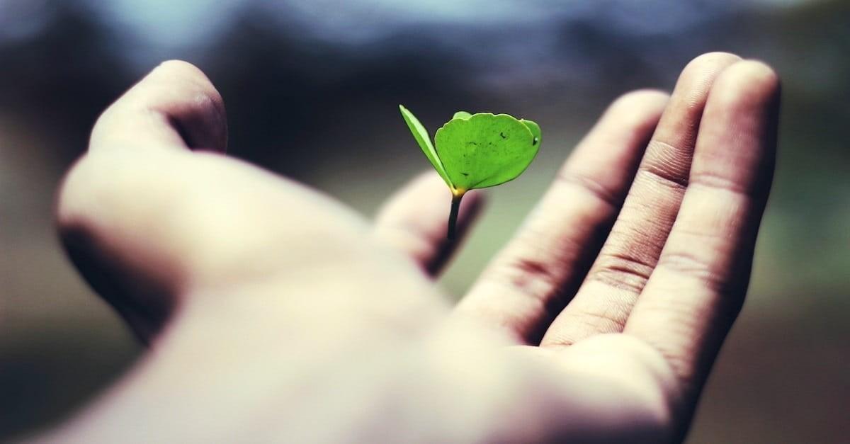 4. Little Seeds Grow Big Trees