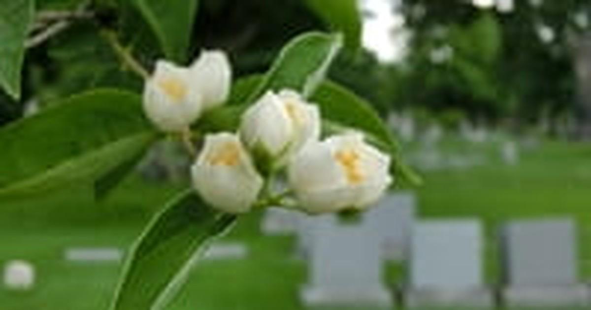 10. God's Garden Needs Flowers