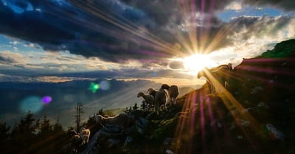 7. God is Our Shepherd