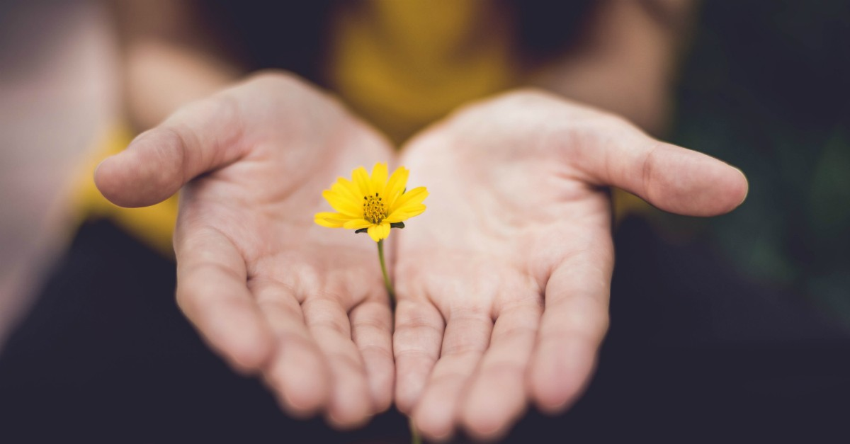 Hands cupping a small, yellow flower