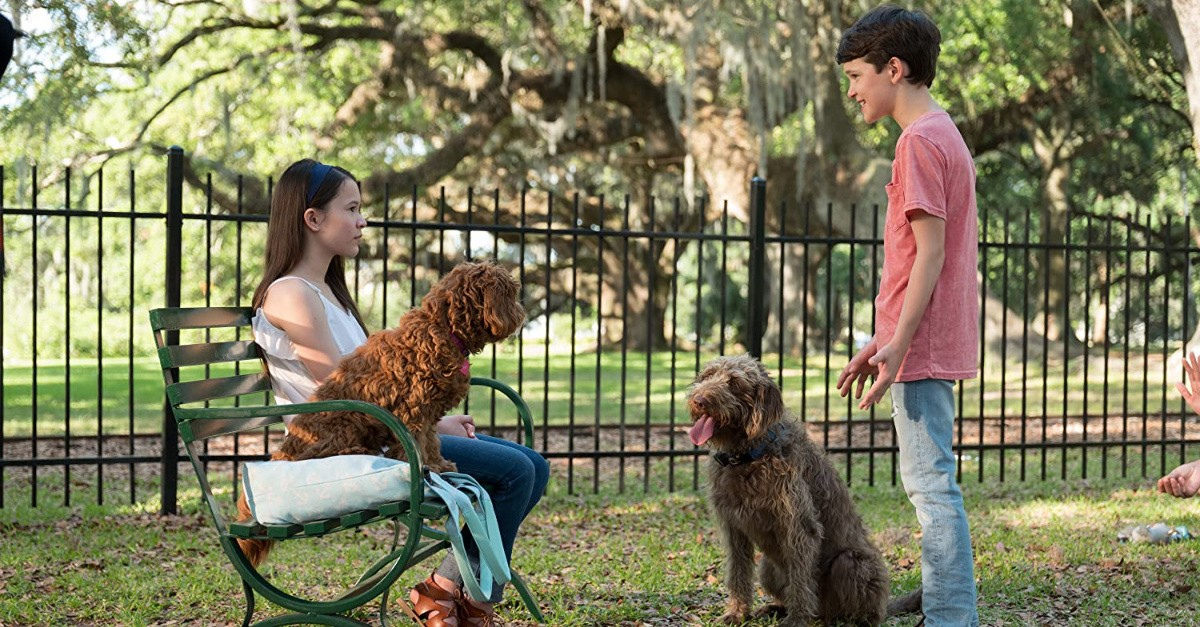 9. <em>Think Like a Dog</em> (On Demand)