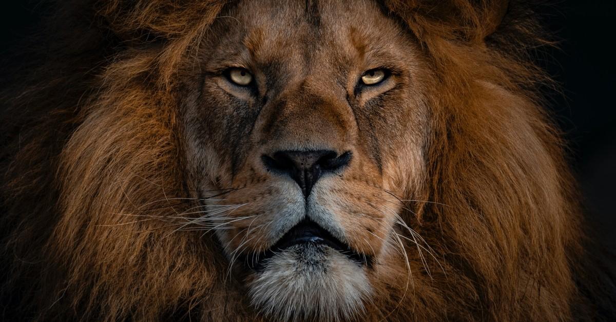 jesus lion of judah