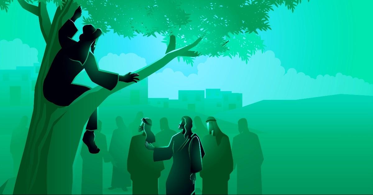 Zacchaeus in the tree