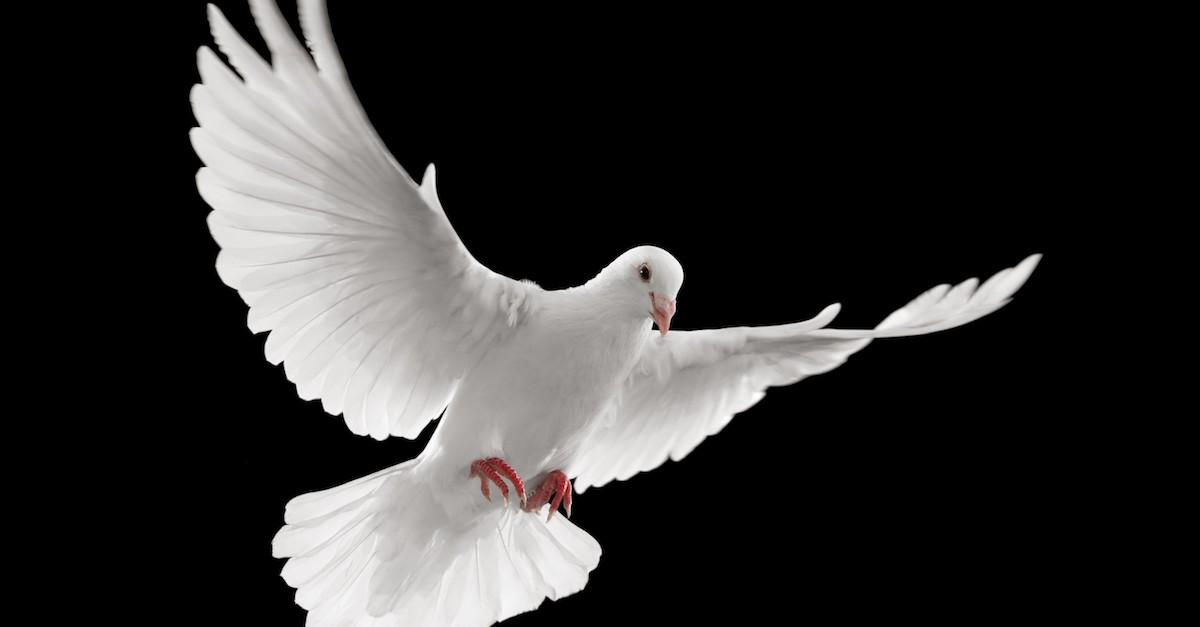 dove flying black background, pneumatology