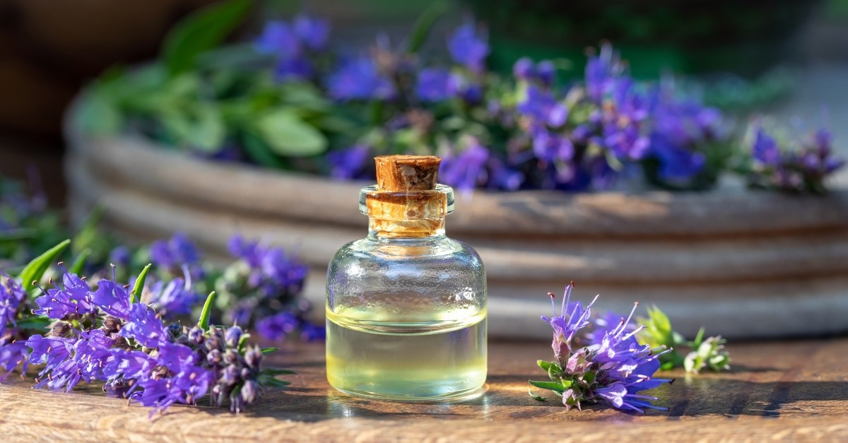 Bottle of essential oil with hyssop plant