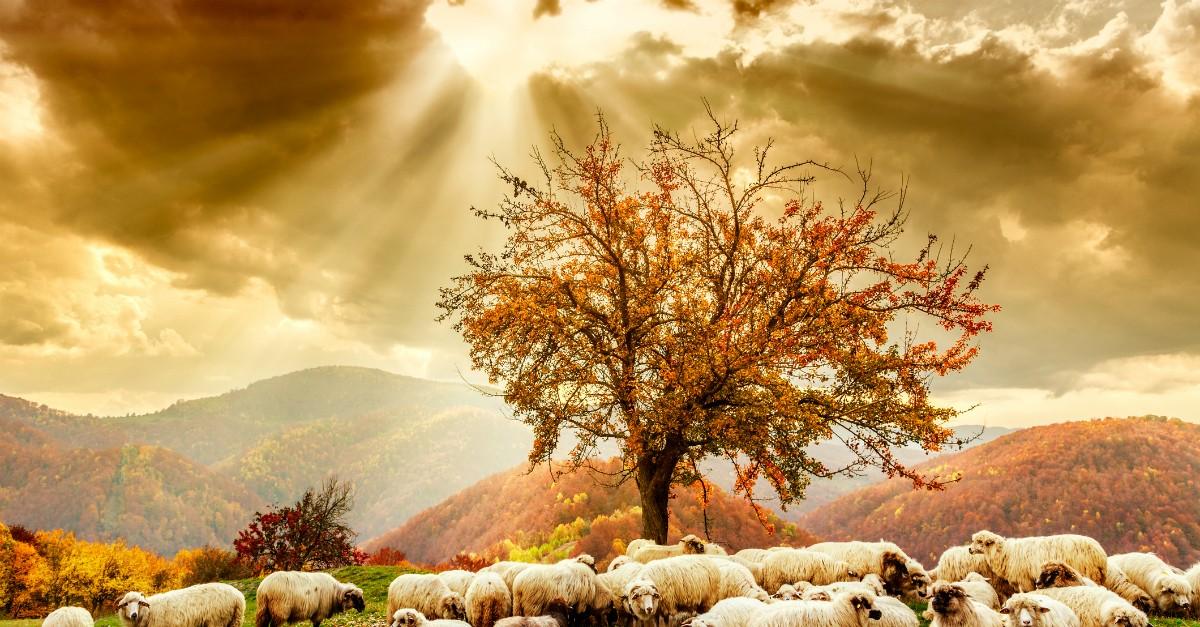 Seasons of Hope - Crosswalk the Devotional - October 17