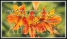 Salmos 13:5