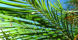 What Is Palm Sunday? - Bible Story and Meaning Today