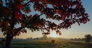 10 Beautiful Psalms for Autumn & Prayers for a New Season