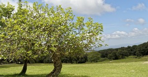 What Can We Learn from the Parable of the Fig Tree?