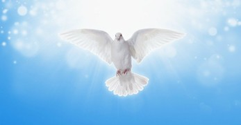 Why Is the Dove Often a Symbol for the Holy Spirit?